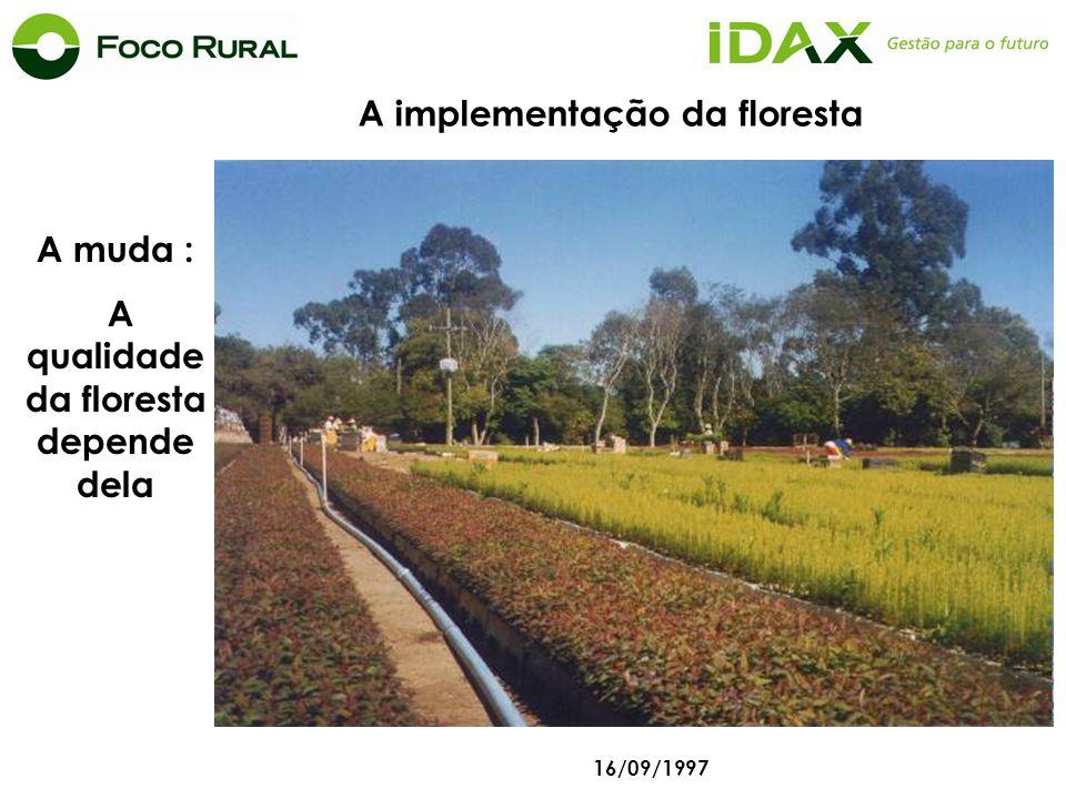 A muda : A qualidade da floresta depende dela 16/09/1997 Coxilha A implementação da floresta