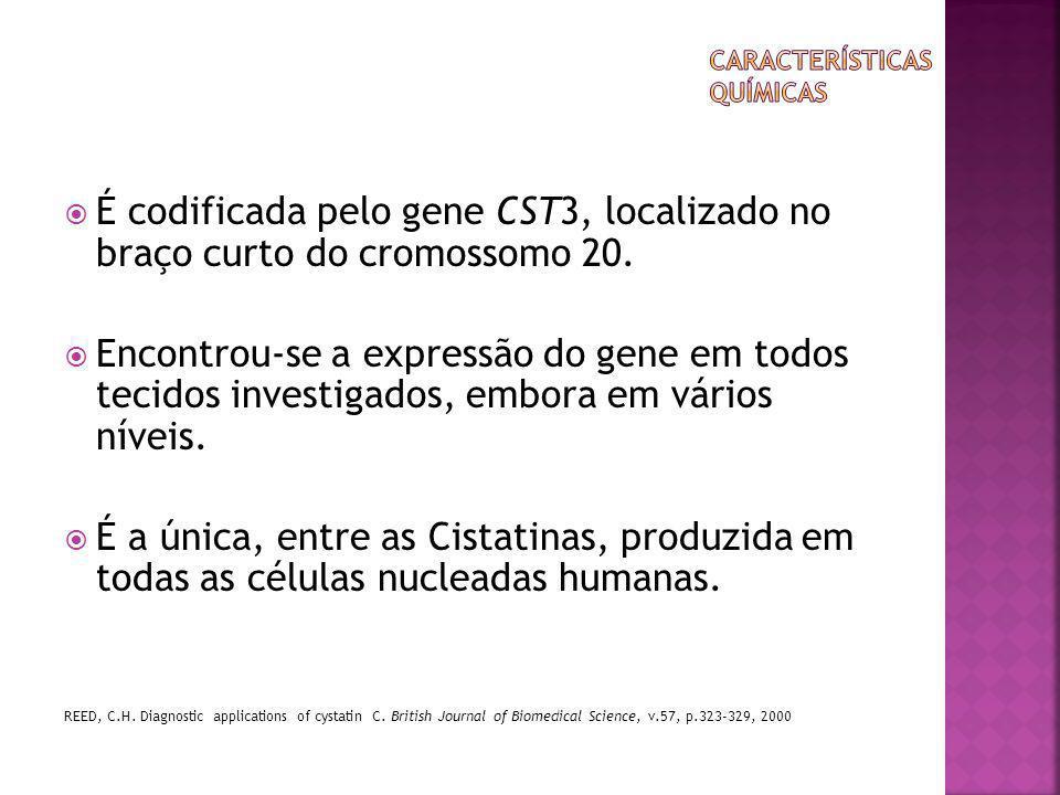  É codificada pelo gene CST3, localizado no braço curto do cromossomo 20.  Encontrou-se a expressão do gene em todos tecidos investigados, embora em