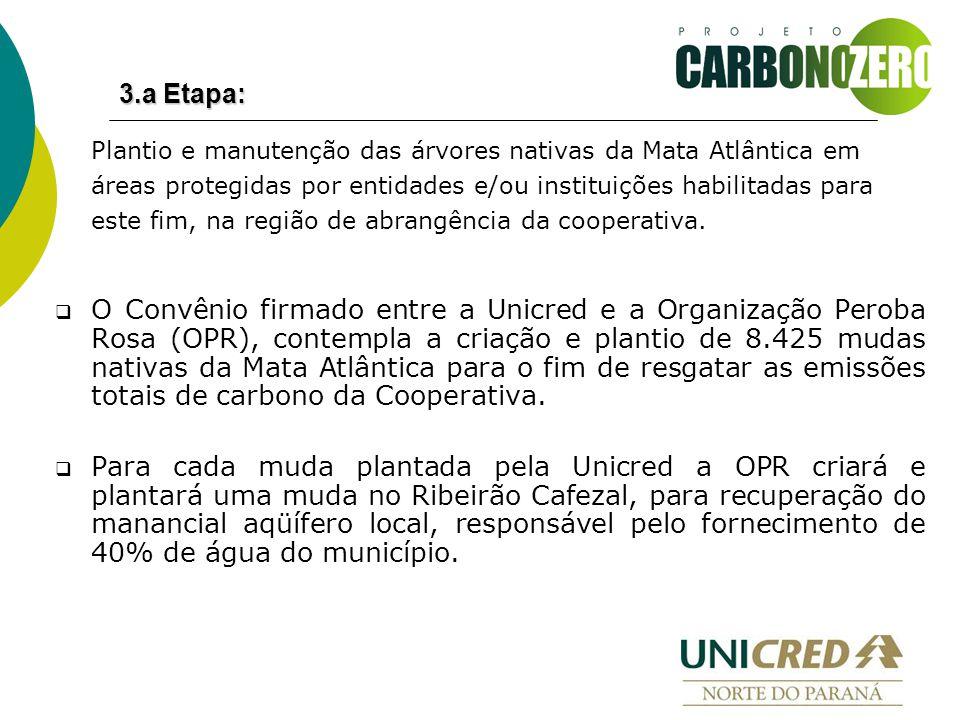 Plantio e manutenção das árvores nativas da Mata Atlântica em áreas protegidas por entidades e/ou instituições habilitadas para este fim, na região de abrangência da cooperativa.