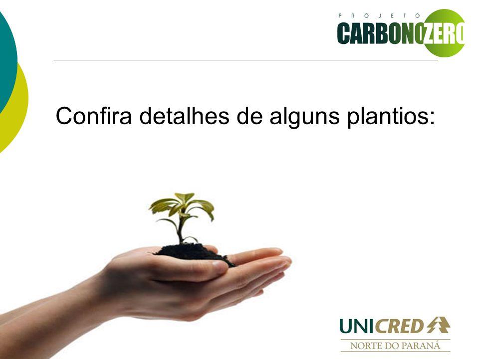 Confira detalhes de alguns plantios: