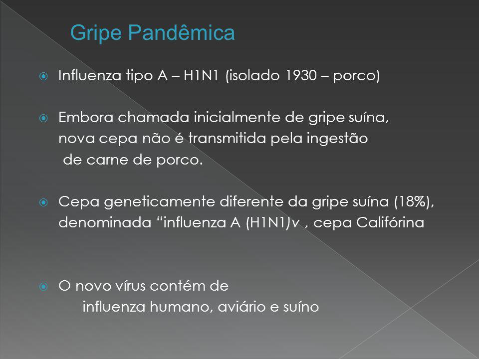  Influenza tipo A – H1N1 (isolado 1930 – porco)  Embora chamada inicialmente de gripe suína, nova cepa não é transmitida pela ingestão de carne de p