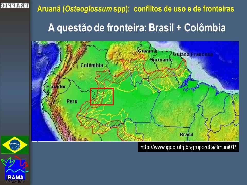 Aruanã ( Osteoglossum spp): conflitos de uso e de fronteiras A questão de fronteira: Brasil + Colômbia http://www.igeo.ufrj.br/gruporetis/ffmuni01/