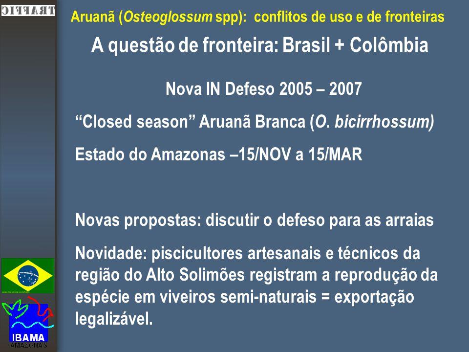 Aruanã ( Osteoglossum spp): conflitos de uso e de fronteiras A questão de fronteira: Brasil + Colômbia Nova IN Defeso 2005 – 2007 Closed season Aruanã Branca ( O.