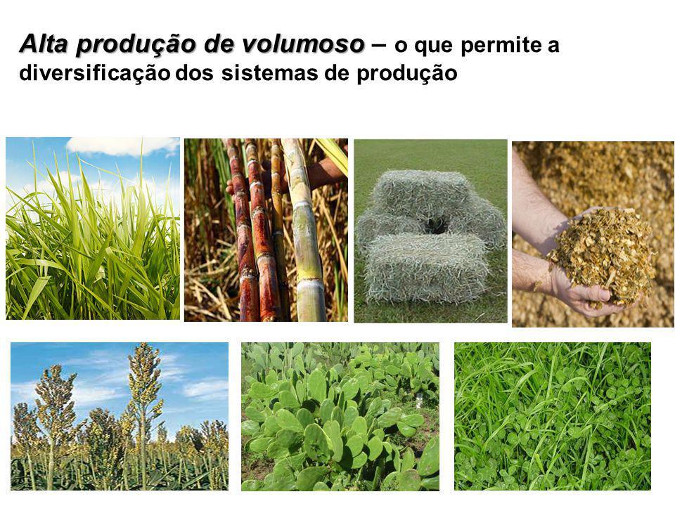 Alta produção de volumoso Alta produção de volumoso – o que permite a diversificação dos sistemas de produção