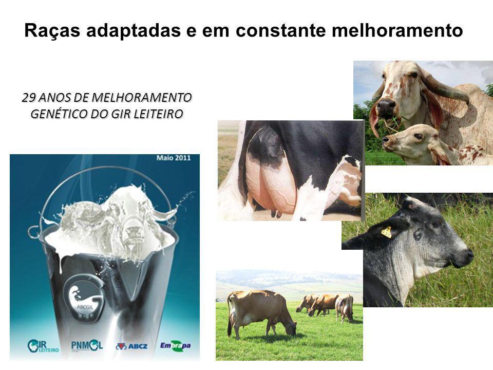 15 Raças adaptadas e em constante melhoramento 29 ANOS DE MELHORAMENTO GENÉTICO DO GIR LEITEIRO