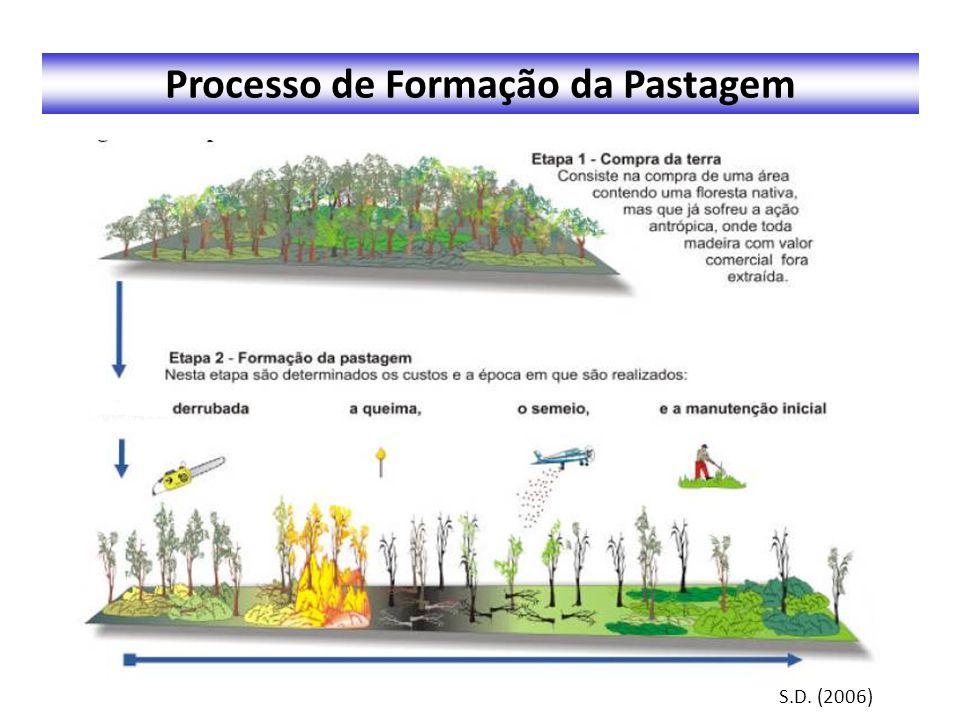 Processo de Formação da Pastagem S.D. (2006)