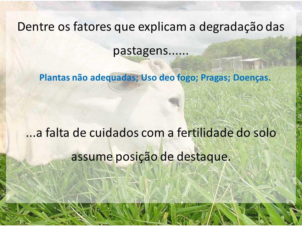 Dentre os fatores que explicam a degradação das pastagens.........a falta de cuidados com a fertilidade do solo assume posição de destaque. Plantas nã