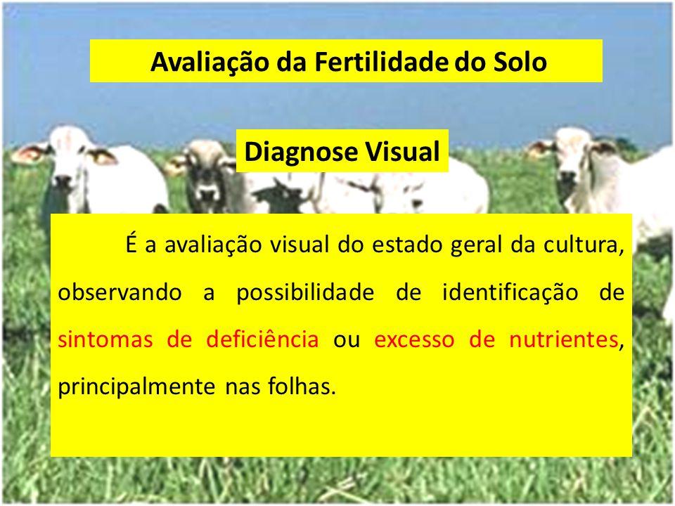 Avaliação da Fertilidade do Solo Diagnose Visual É a avaliação visual do estado geral da cultura, observando a possibilidade de identificação de sinto