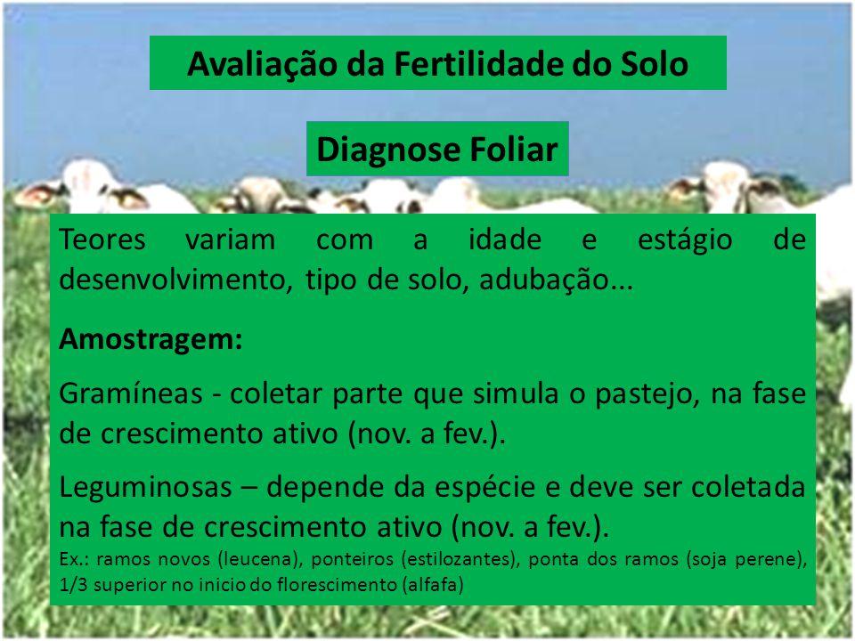 Diagnose Foliar Teores variam com a idade e estágio de desenvolvimento, tipo de solo, adubação... Amostragem: Gramíneas - coletar parte que simula o p