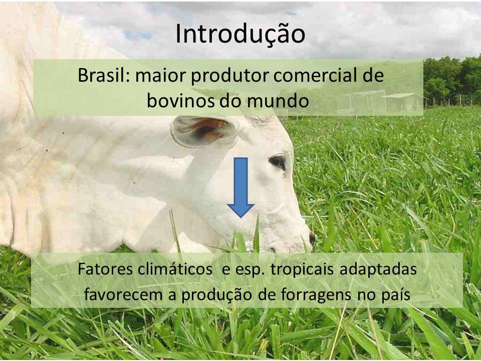 Introdução Fatores climáticos e esp. tropicais adaptadas favorecem a produção de forragens no país Brasil: maior produtor comercial de bovinos do mund