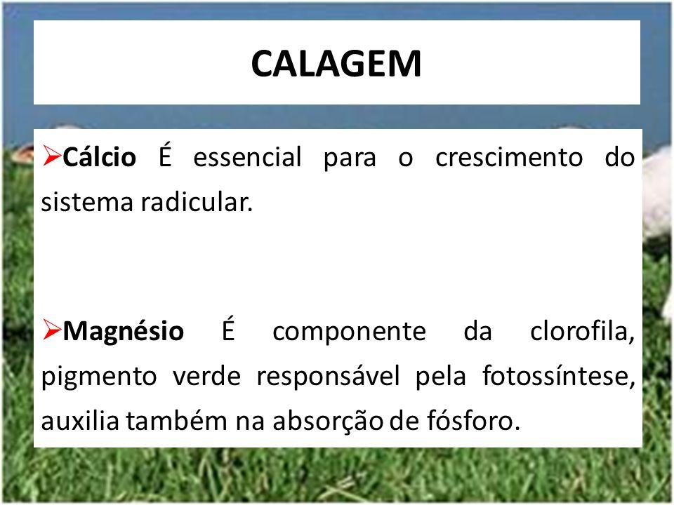  Cálcio É essencial para o crescimento do sistema radicular.  Magnésio É componente da clorofila, pigmento verde responsável pela fotossíntese, auxi