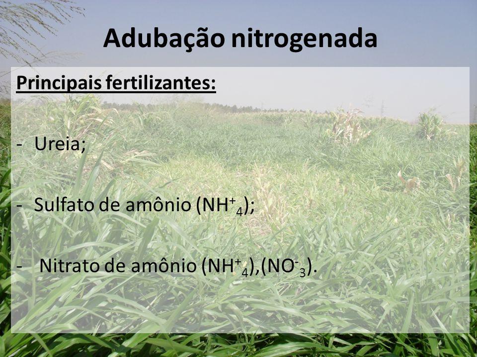 Principais fertilizantes: -Ureia; -Sulfato de amônio (NH + 4 ); - Nitrato de amônio (NH + 4 ),(NO - 3 ). Adubação nitrogenada