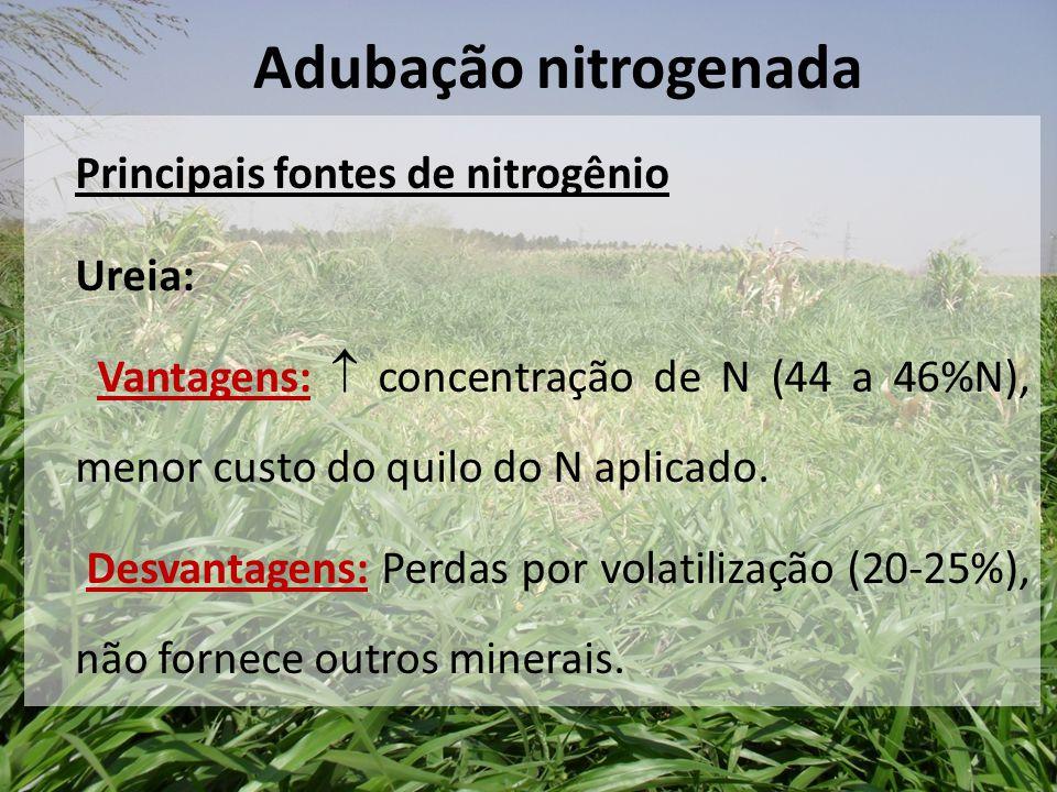 Principais fontes de nitrogênio Ureia: Vantagens:  concentração de N (44 a 46%N), menor custo do quilo do N aplicado. Desvantagens: Perdas por volati
