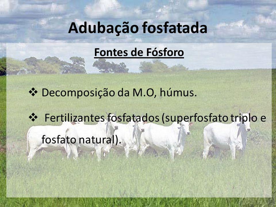 Fontes de Fósforo  Decomposição da M.O, húmus.  Fertilizantes fosfatados (superfosfato triplo e fosfato natural). Adubação fosfatada