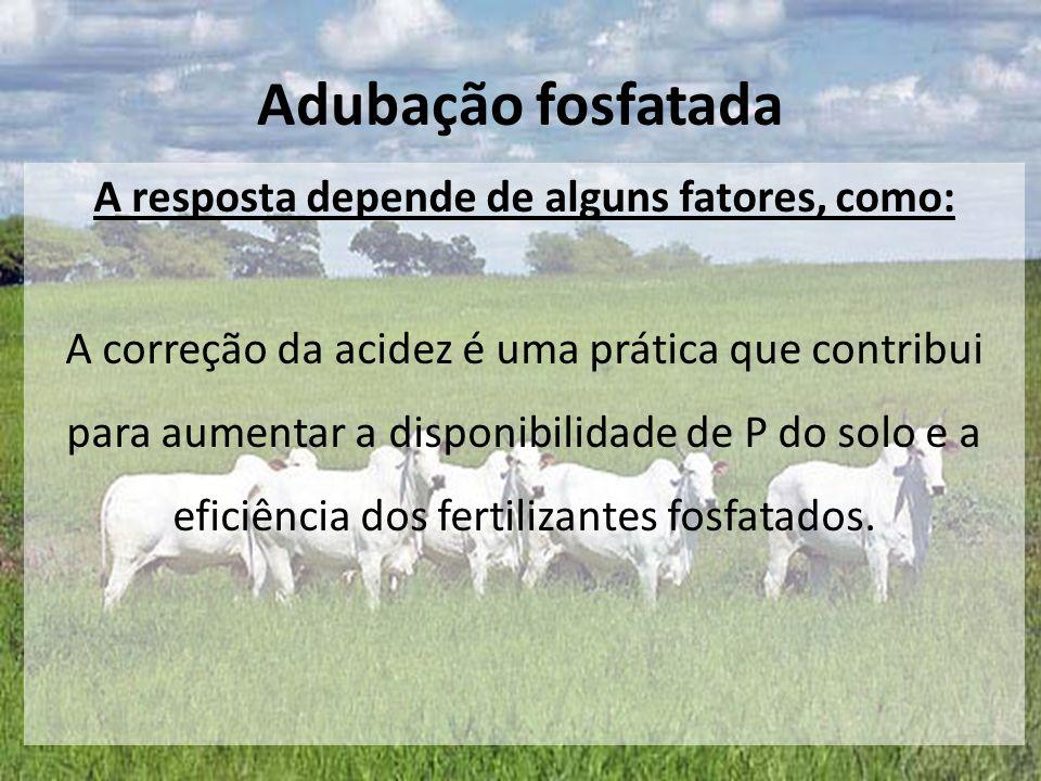 A resposta depende de alguns fatores, como: A correção da acidez é uma prática que contribui para aumentar a disponibilidade de P do solo e a eficiênc