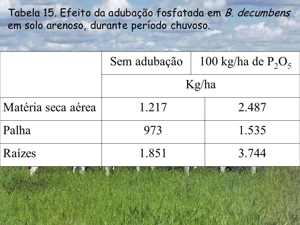 Sem adubação100 kg/ha de P 2 O 5 Kg/ha Matéria seca aérea1.2172.487 Palha9731.535 Raízes1.8513.744 Tabela 15. Efeito da adubação fosfatada em B. decum