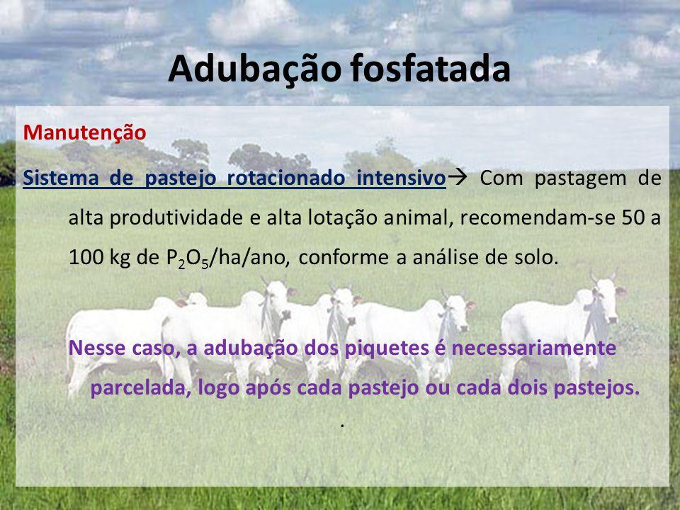 Manutenção Sistema de pastejo rotacionado intensivo  Com pastagem de alta produtividade e alta lotação animal, recomendam-se 50 a 100 kg de P 2 O 5 /