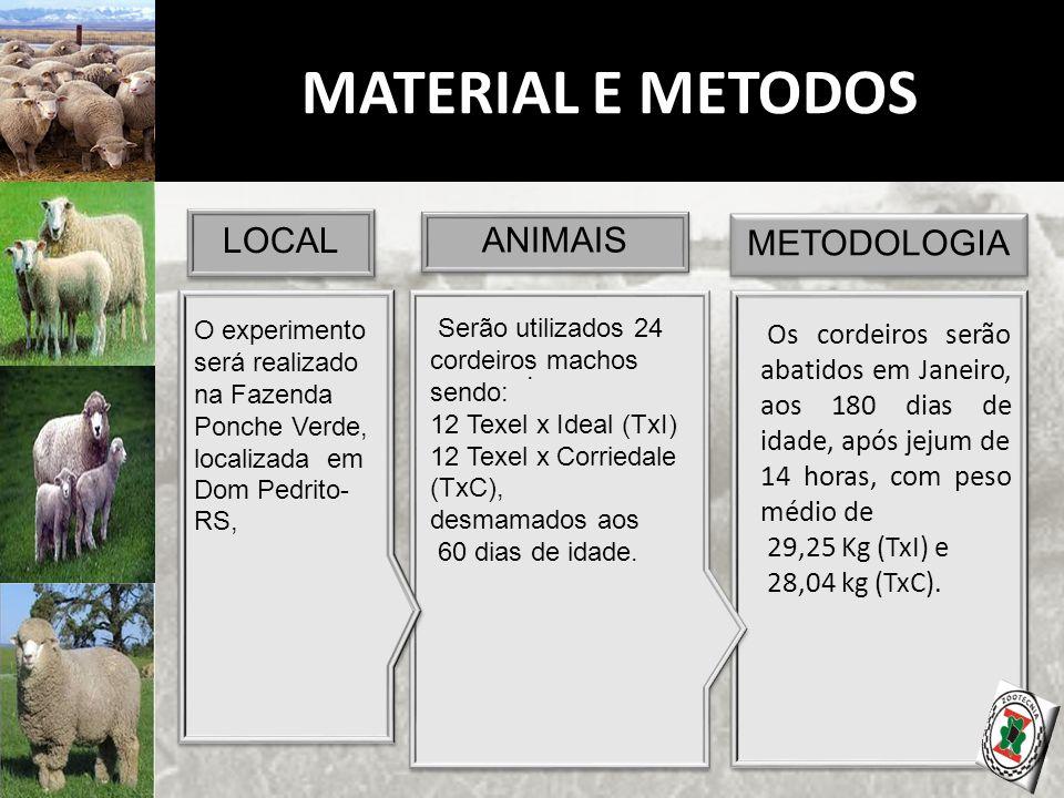 MATERIAL E METODOS METODOLOGIA ANIMAIS LOCAL O experimento será realizado na Fazenda Ponche Verde, localizada em Dom Pedrito- RS,.