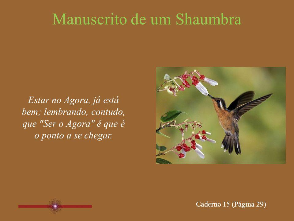 Manuscrito de um Shaumbra Caderno 15 Páginas 29, 30, 31, 32 www.manuscritoshaumbra.com NOV/2011