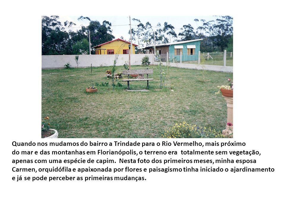 Quando nos mudamos do bairro a Trindade para o Rio Vermelho, mais próximo do mar e das montanhas em Florianópolis, o terreno era totalmente sem vegetação, apenas com uma espécie de capim.