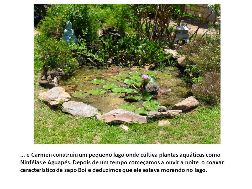 ... e Carmen construiu um pequeno lago onde cultiva plantas aquáticas como Ninféias e Aguapés.