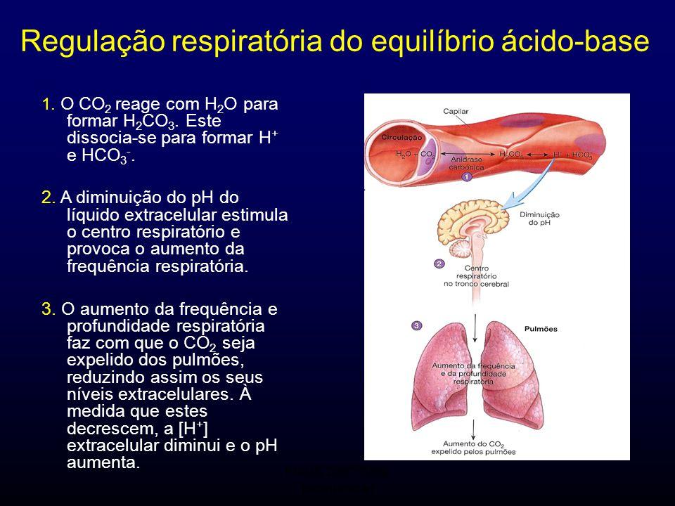 FMUC 2007/2008 Bioquímica I Regulação respiratória do equilíbrio ácido-base 1. O CO 2 reage com H 2 O para formar H 2 CO 3. Este dissocia-se para form
