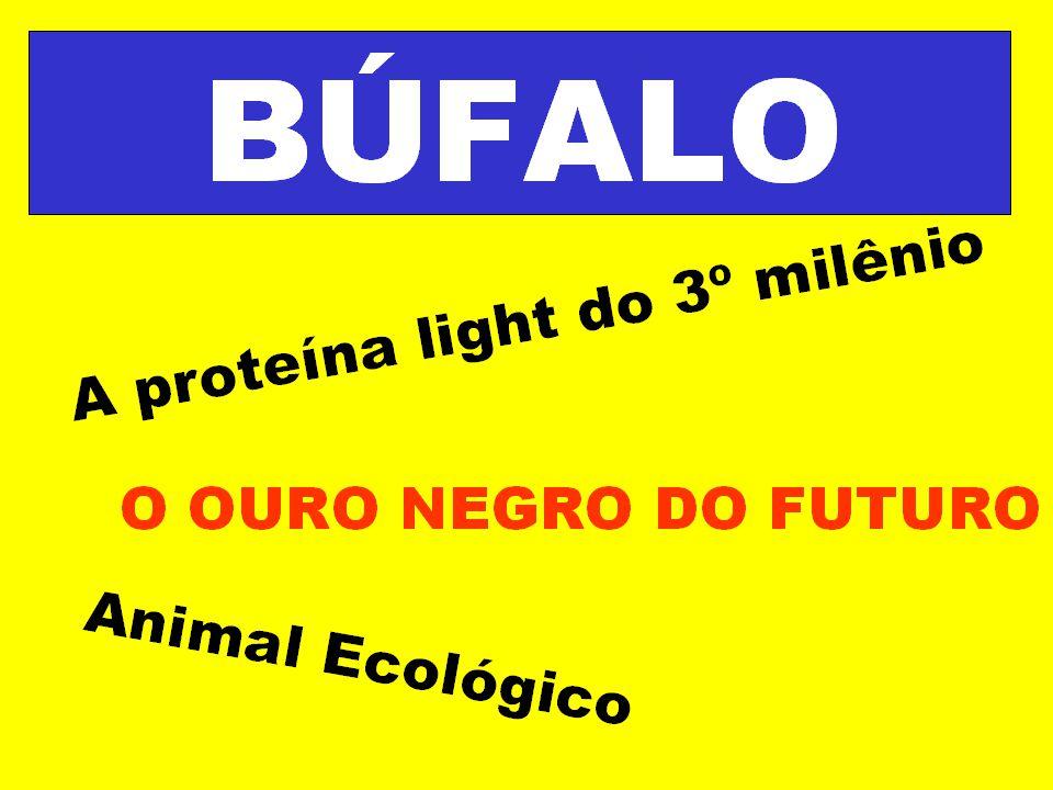 Búfalo – animal ecologicamente sustentável... Sua importância para o Meio Ambiente...