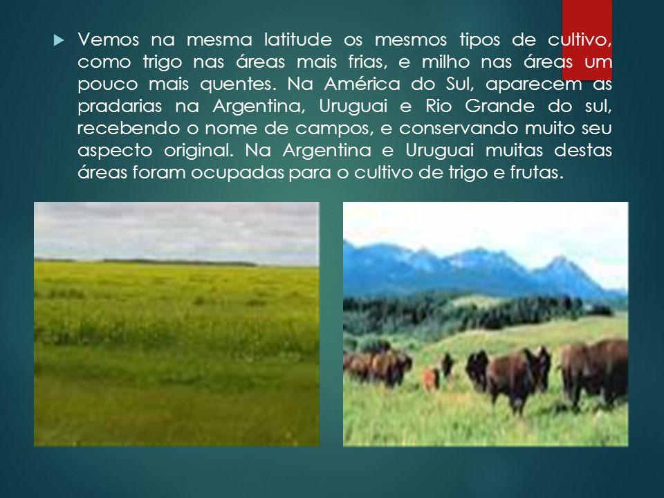  Vemos na mesma latitude os mesmos tipos de cultivo, como trigo nas áreas mais frias, e milho nas áreas um pouco mais quentes. Na América do Sul, apa