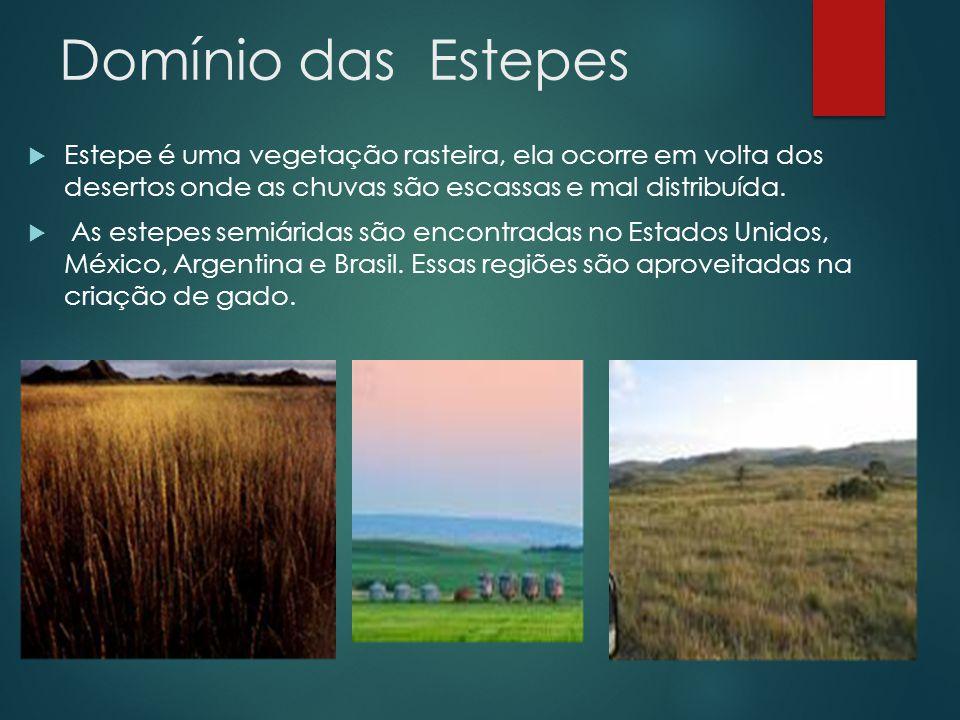 Domínio das Estepes  Estepe é uma vegetação rasteira, ela ocorre em volta dos desertos onde as chuvas são escassas e mal distribuída.  As estepes se