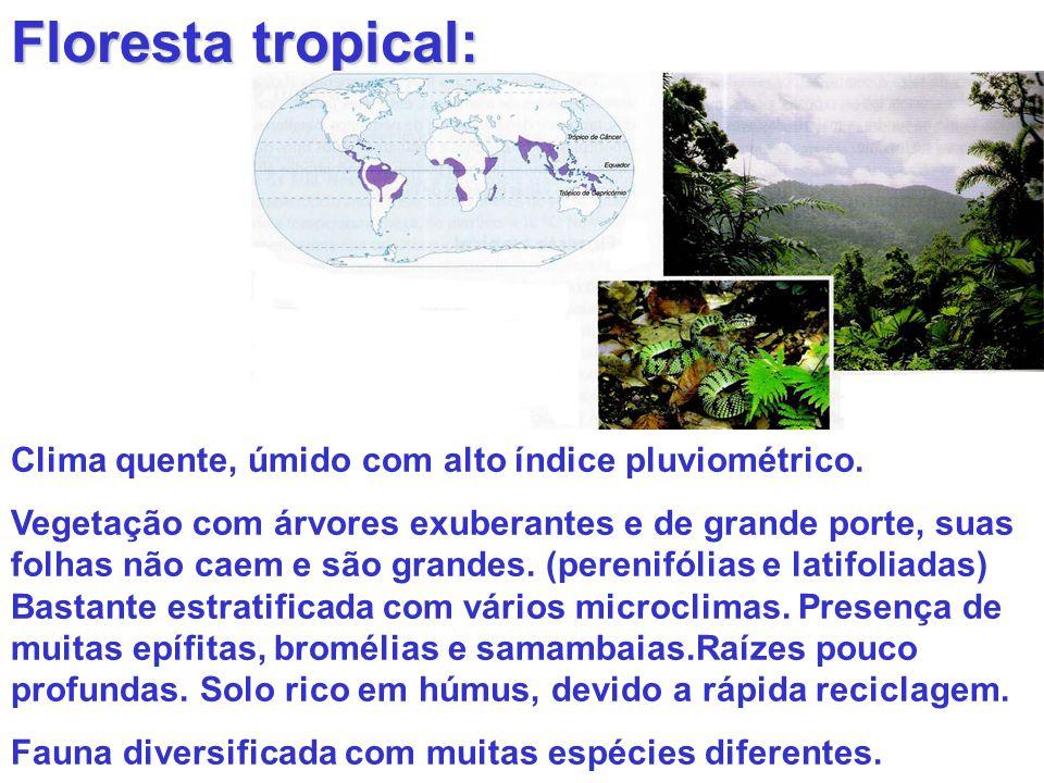 Floresta tropical: Clima quente, úmido com alto índice pluviométrico. Vegetação com árvores exuberantes e de grande porte, suas folhas não caem e são