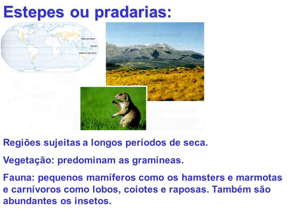 Estepes ou pradarias: Regiões sujeitas a longos períodos de seca. Vegetação: predominam as gramíneas. Fauna: pequenos mamíferos como os hamsters e mar