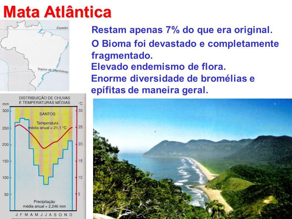 Mata Atlântica Restam apenas 7% do que era original. O Bioma foi devastado e completamente fragmentado. Elevado endemismo de flora. Enorme diversidade
