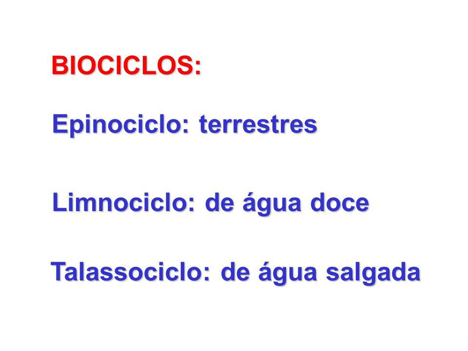 BIOCICLOS: Epinociclo: terrestres Limnociclo: de água doce Talassociclo: de água salgada