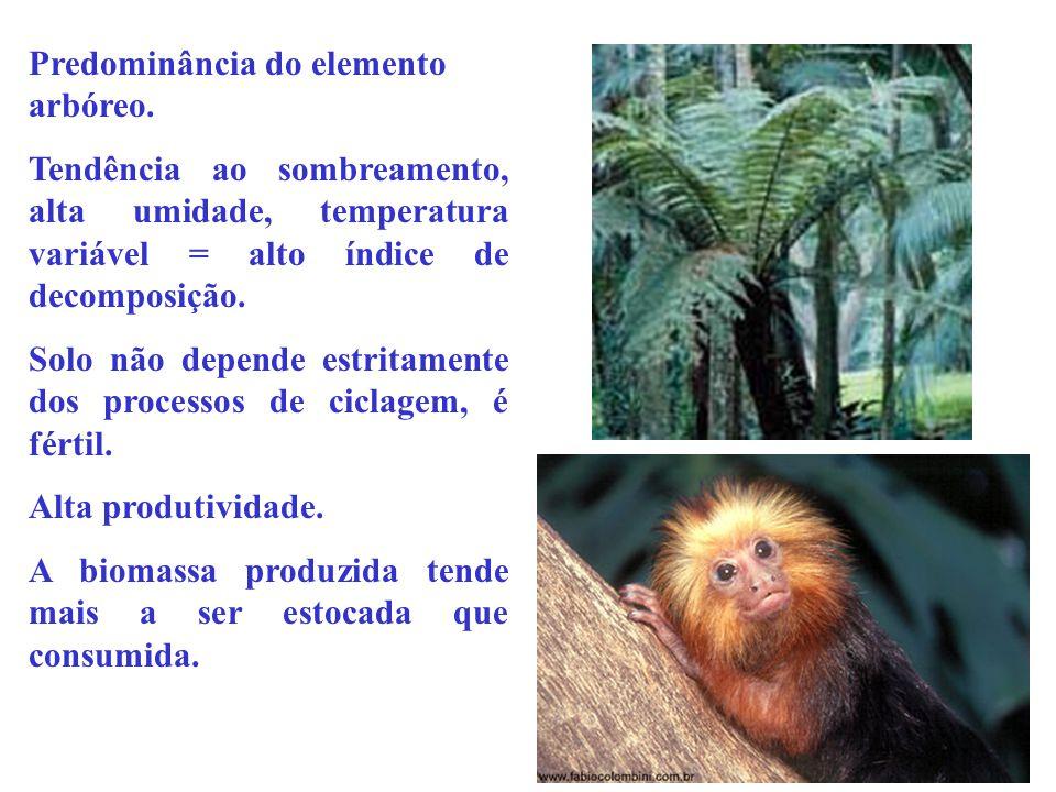 Predominância do elemento arbóreo. Tendência ao sombreamento, alta umidade, temperatura variável = alto índice de decomposição. Solo não depende estri