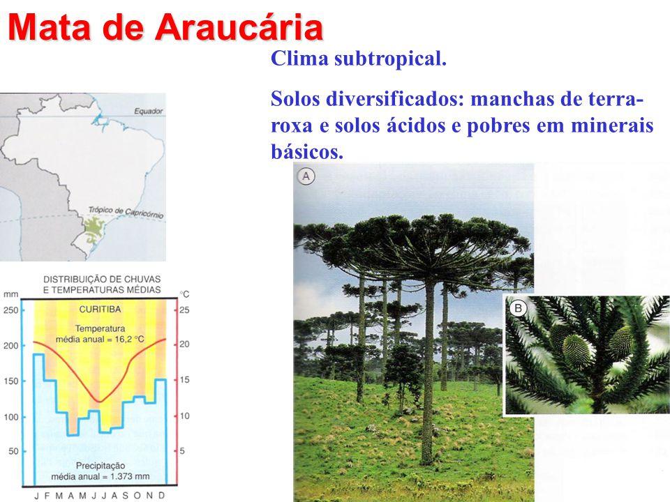 Mata de Araucária Clima subtropical. Solos diversificados: manchas de terra- roxa e solos ácidos e pobres em minerais básicos.