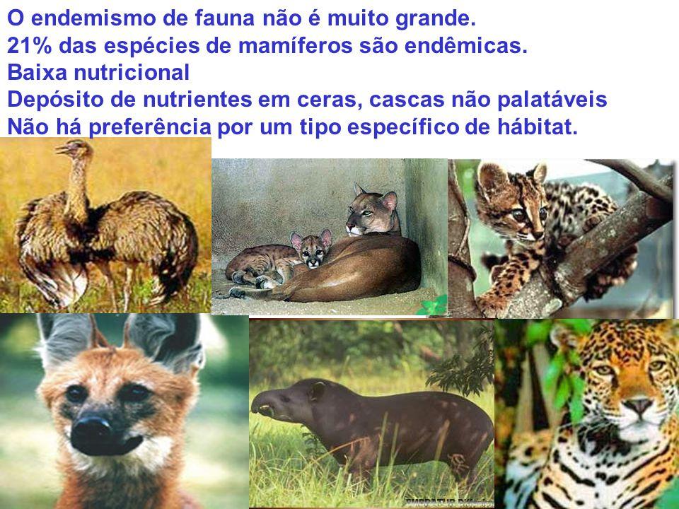 O endemismo de fauna não é muito grande. 21% das espécies de mamíferos são endêmicas. Baixa nutricional Depósito de nutrientes em ceras, cascas não pa