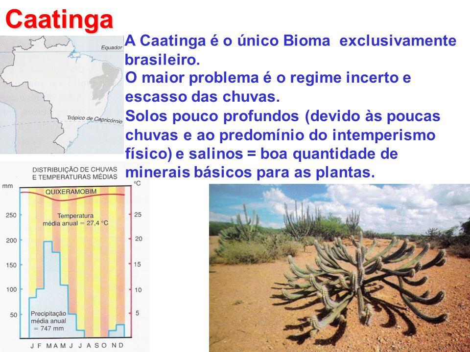 Caatinga A Caatinga é o único Bioma exclusivamente brasileiro. O maior problema é o regime incerto e escasso das chuvas. Solos pouco profundos (devido
