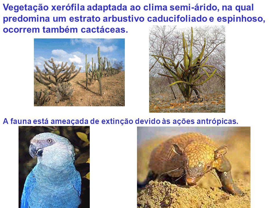Vegetação xerófila adaptada ao clima semi-árido, na qual predomina um estrato arbustivo caducifoliado e espinhoso, ocorrem também cactáceas. A fauna e
