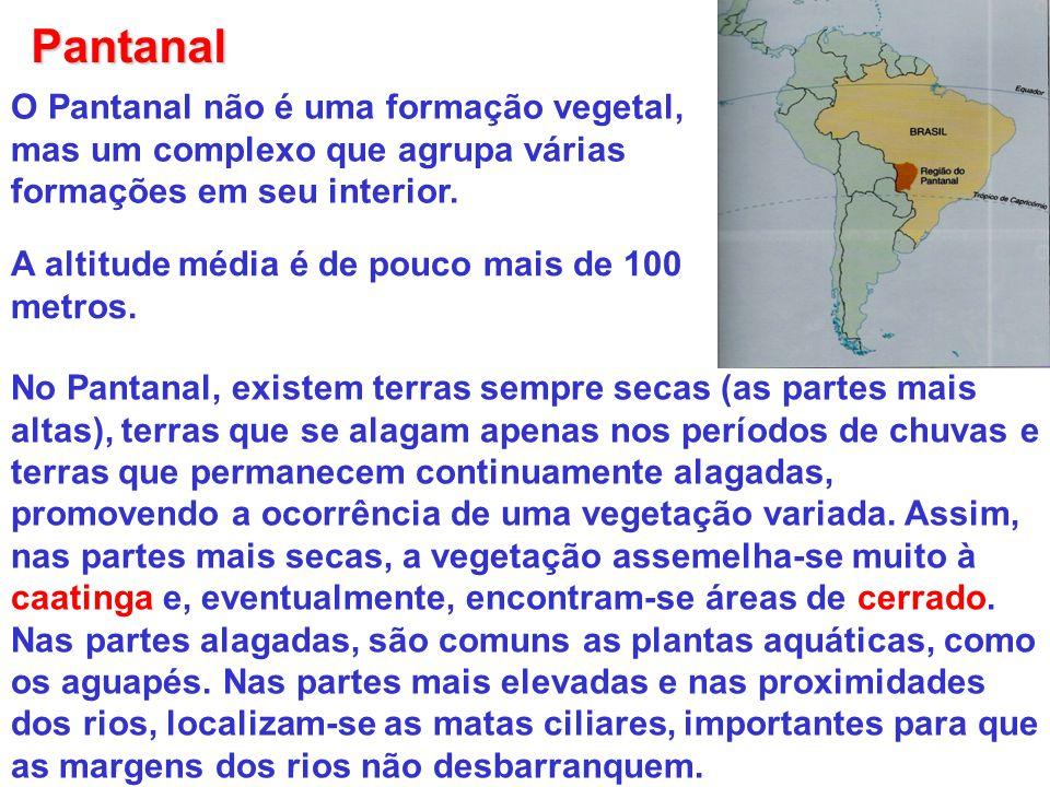 Pantanal O Pantanal não é uma formação vegetal, mas um complexo que agrupa várias formações em seu interior. A altitude média é de pouco mais de 100 m