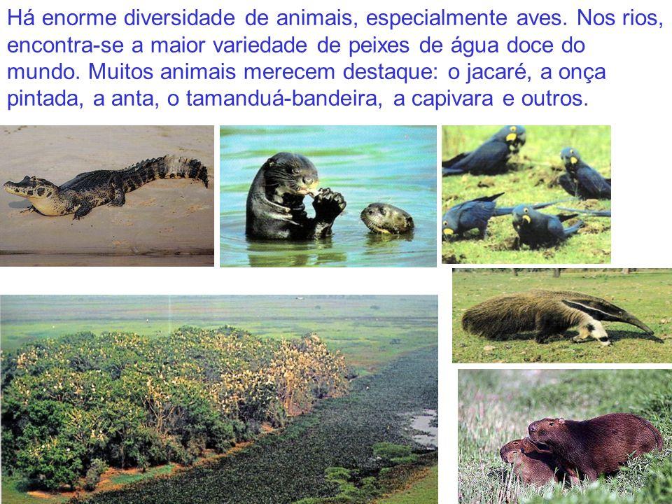 Há enorme diversidade de animais, especialmente aves. Nos rios, encontra-se a maior variedade de peixes de água doce do mundo. Muitos animais merecem