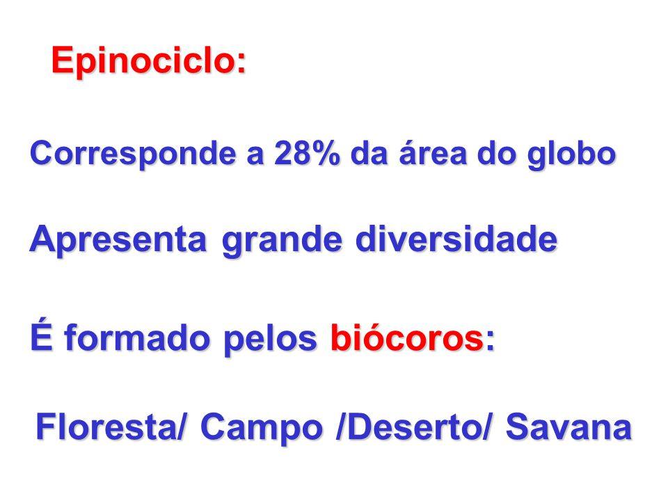 Epinociclo: Corresponde a 28% da área do globo Apresenta grande diversidade É formado pelos biócoros: Floresta/ Campo /Deserto/ Savana