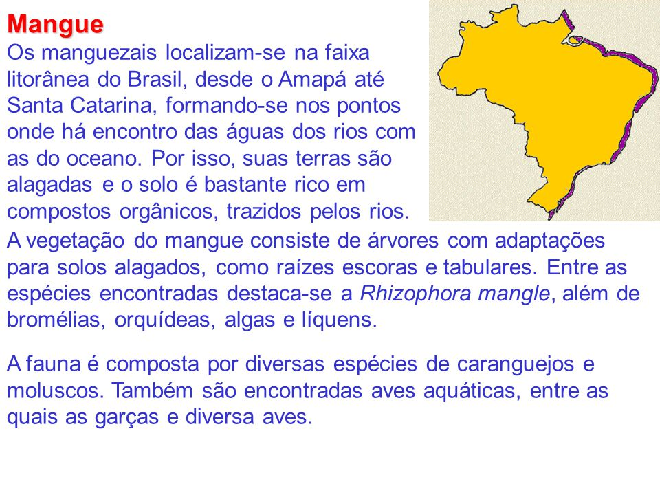 Mangue Os manguezais localizam-se na faixa litorânea do Brasil, desde o Amapá até Santa Catarina, formando-se nos pontos onde há encontro das águas do