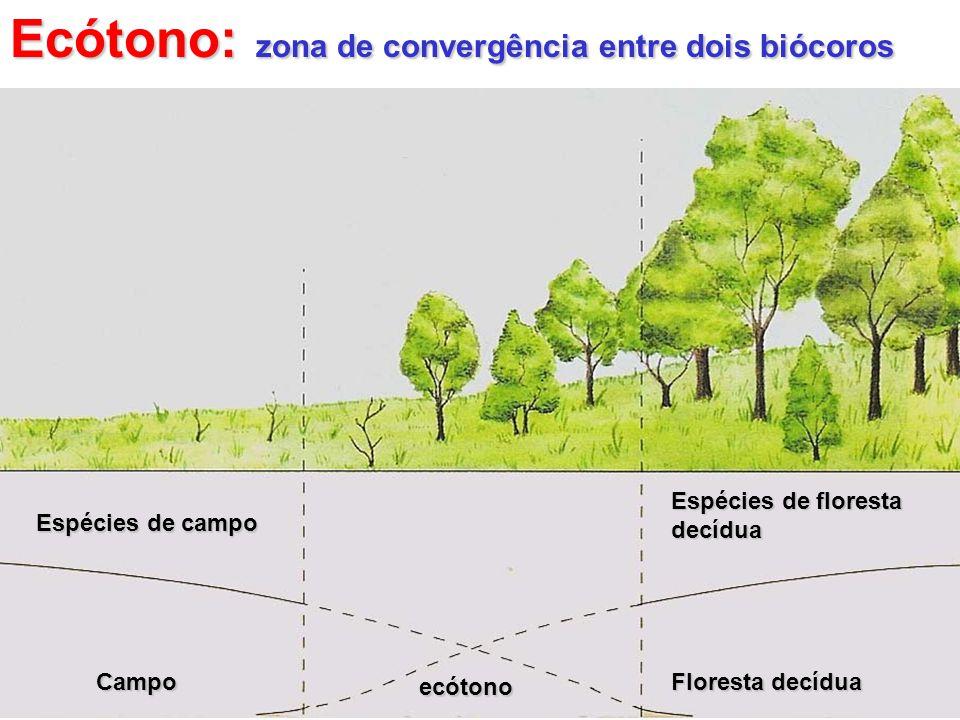 Cada biócoro é formado por vários biomas Biomas Biomas : conjunto de ecossitemas terrestres com vegetação e fisionomia típica, onde predomina certo tipo de clima.