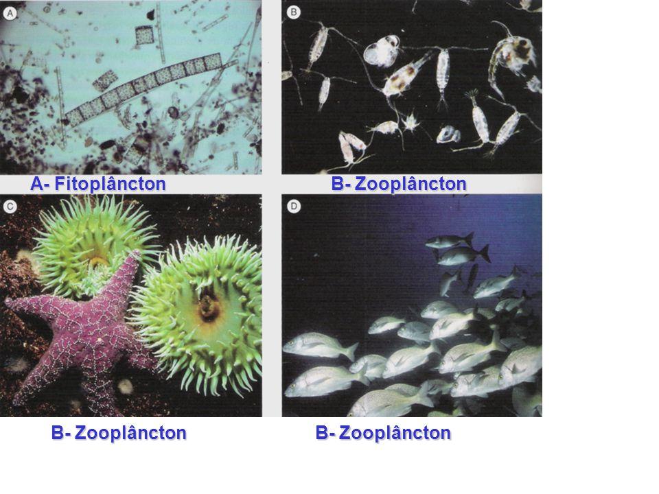 A- Fitoplâncton B- Zooplâncton