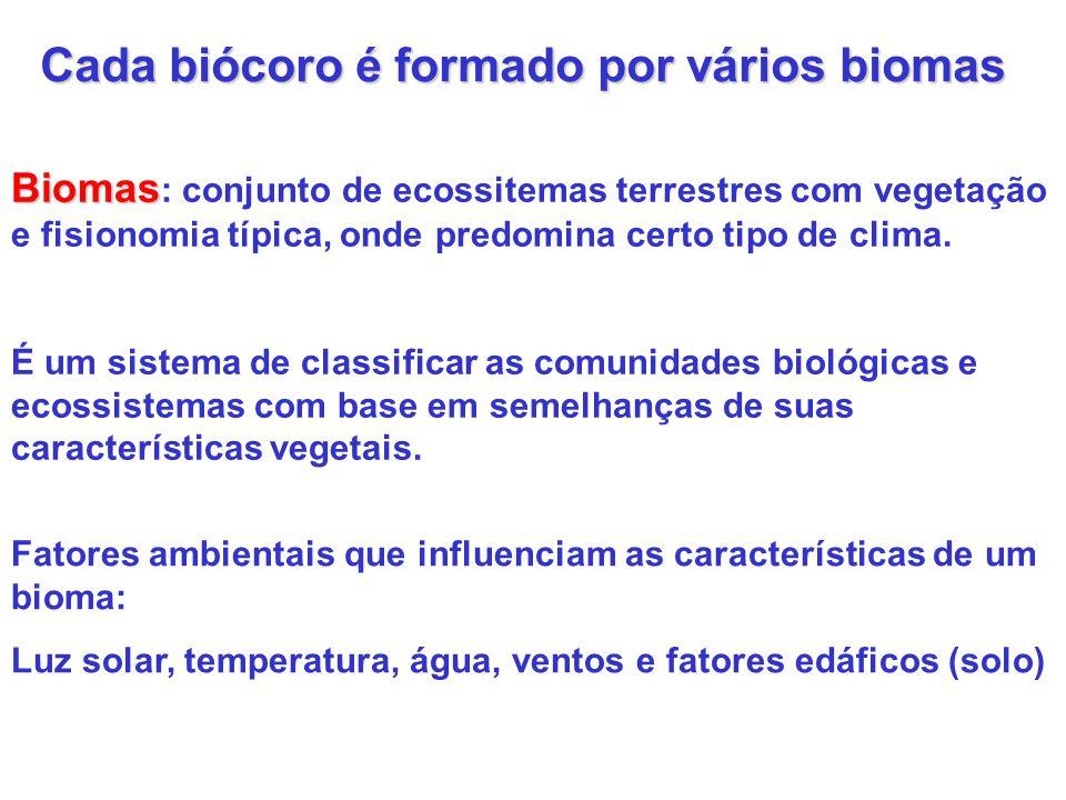 Biomas brasileiros ou regiões fitogeo- gráficas