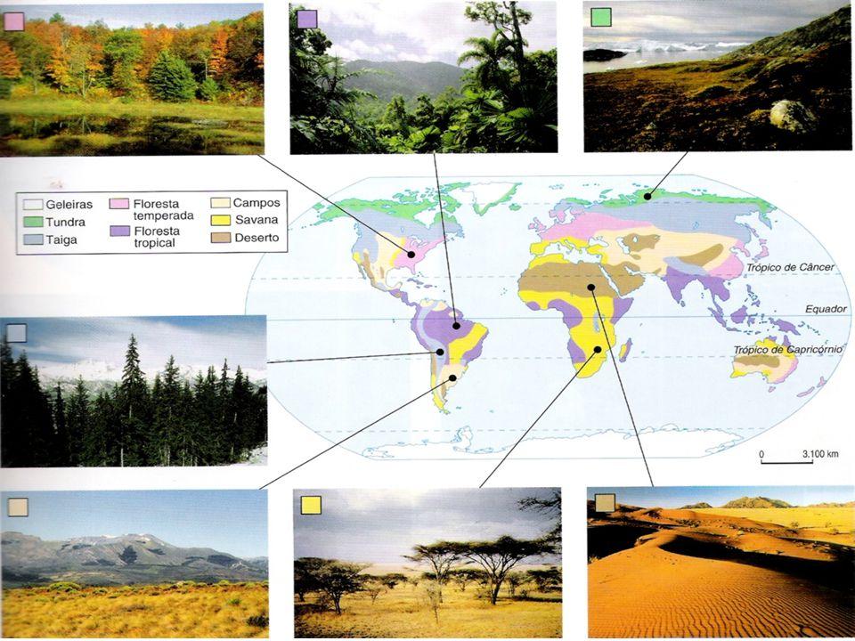 Biomas da Terra: Tundra Temperatura no verão: 10 ºC Vegetação: liquens, musgos, gramíneas e pequenos arbustos.