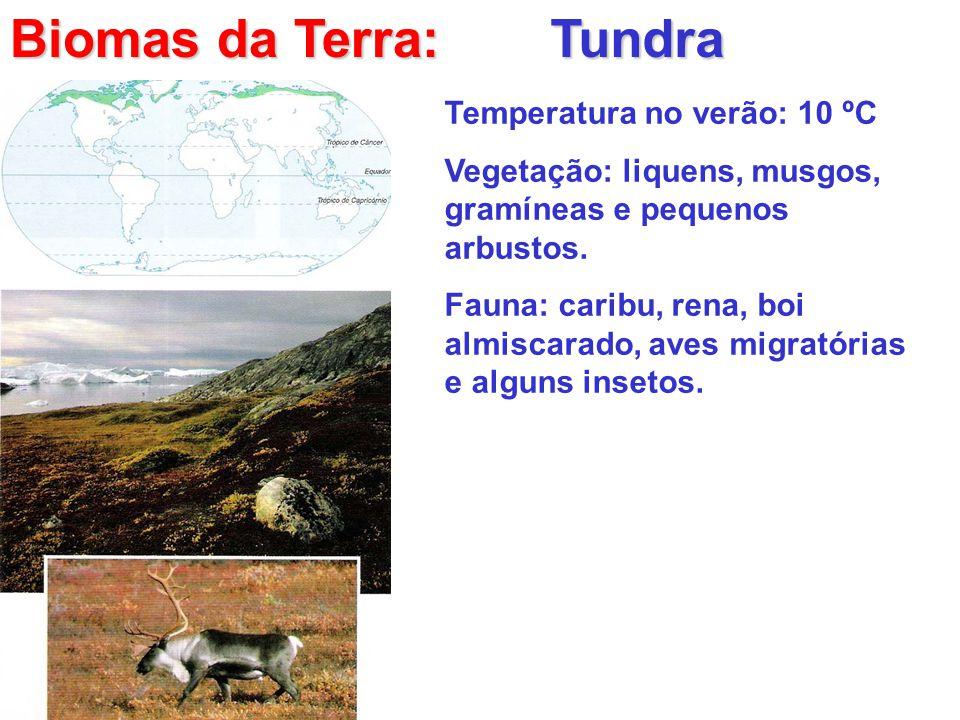 Biomas da Terra: Tundra Temperatura no verão: 10 ºC Vegetação: liquens, musgos, gramíneas e pequenos arbustos. Fauna: caribu, rena, boi almiscarado, a