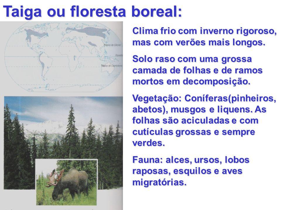 Taiga ou floresta boreal: Clima frio com inverno rigoroso, mas com verões mais longos. Solo raso com uma grossa camada de folhas e de ramos mortos em