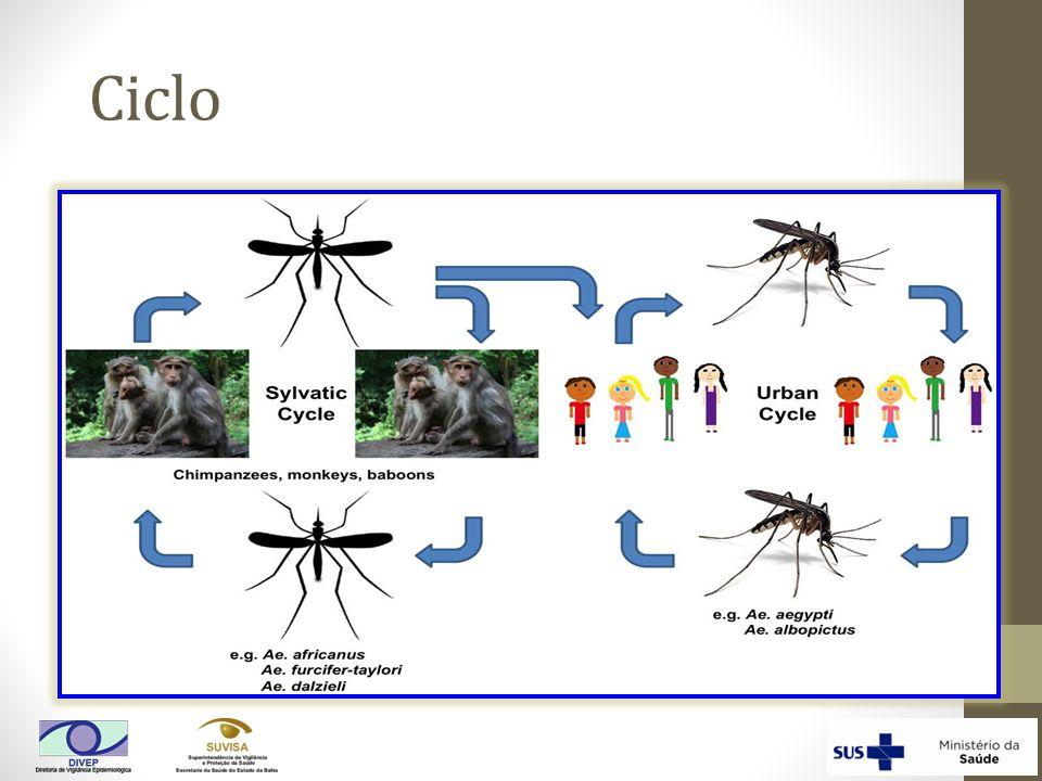 Comparação das Características Clínicas e Laboratoriais de Infecções do vírus de Chikungunya e Dengue 1 Características Clínicas e Laboratoriais Infecção pelo vírus de Chikungunya Infecção pelo vírus da Dengue Febre (>102°F ou 39°C)+++++ Mialgias+++ Artralgias++++/- Cefaleia++++ 2 Erupção cutânea+++ Discrasias hemorrágicas+/-++ Choques-+ Leucopenia+++++ Neutropenia++++ Linfopenia+++++ Hematócrito elevado-++ Trombocitopenia++++ 1 Frequência média dos sintomas de estudos onde as duas doenças foram diretamente comparadas entre pacientes que procuravam ajuda; +++ = 70-100% dos pacientes; ++ = 40-69%; + = 10-39%; +/- = <10%; - = 0% 32, 33 2 Geralmente retro-orbital Tabela modificada por Staples et al.