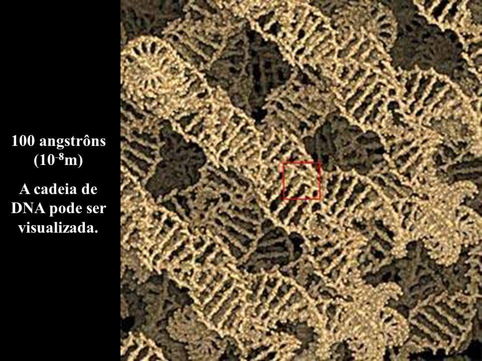 100 angstrôns (10 -8 m) A cadeia de DNA pode ser visualizada.